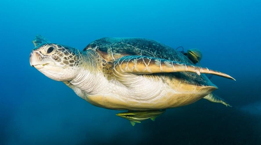 アオウミガメの画像 p1_23